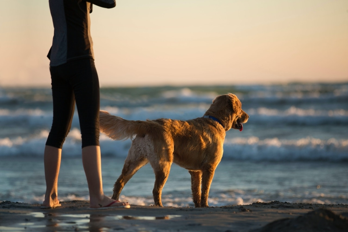 A woman and a golden retriever stand on a beach facing the ocean.
